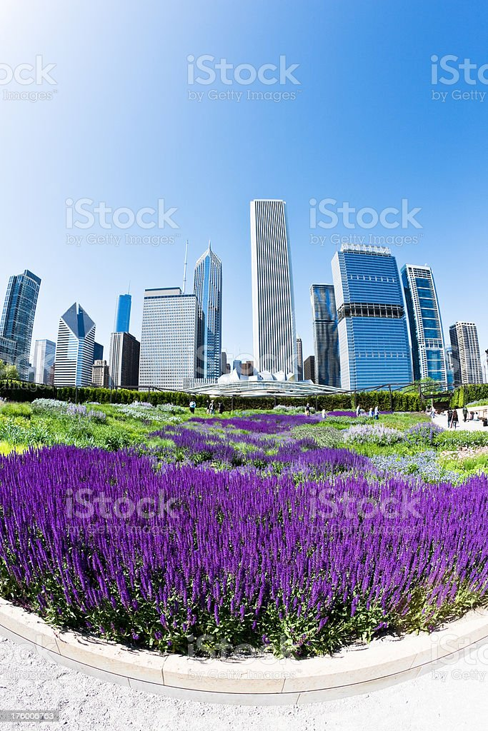Chicago Skyscrapers and Purple Flowers stock photo