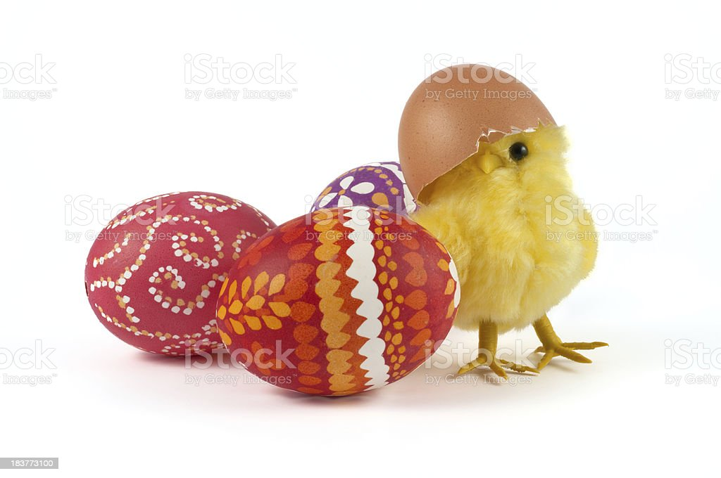 Chick and easter eggs stock photo