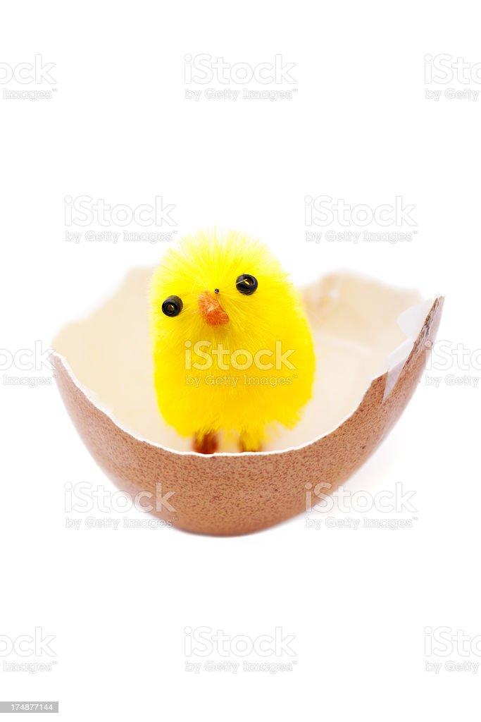 Chick in egg-shell royalty-free stock photo