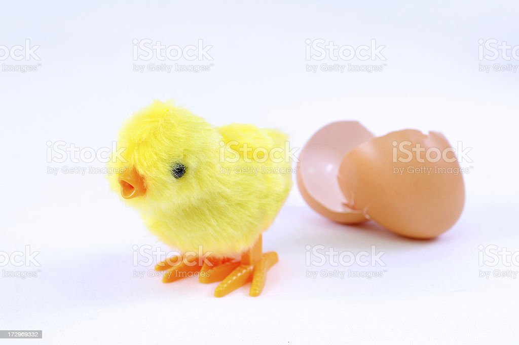 chick move out in the egg royalty-free stock photo