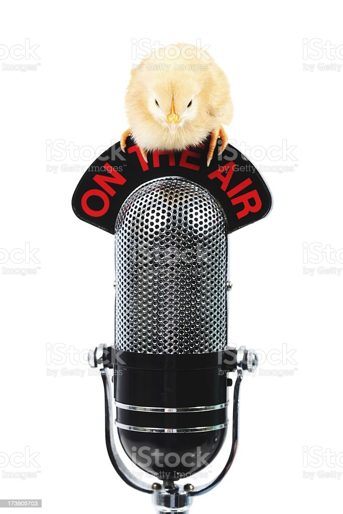Chick on a microphone royalty-free stock photo