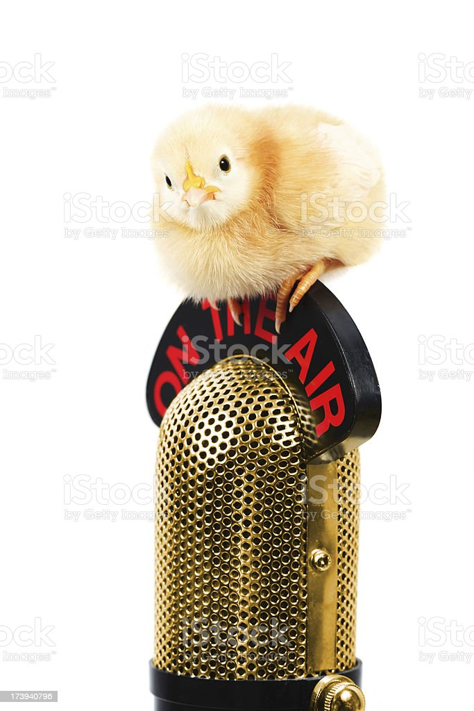 Chick On The Air gold royalty-free stock photo