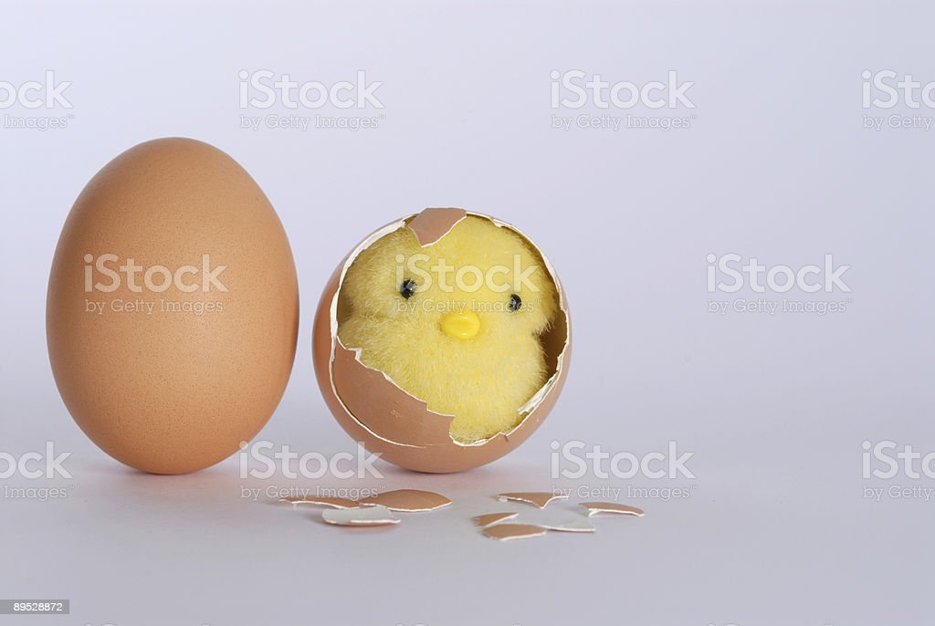 chick slips out of the egg royalty-free stock photo