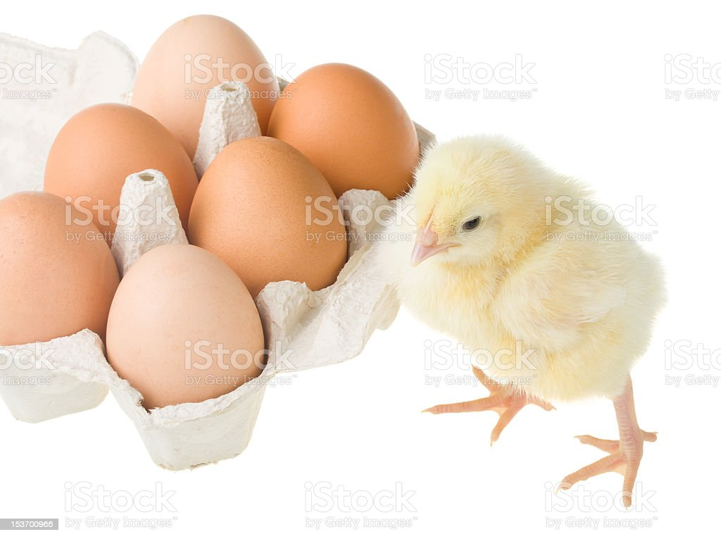 chick standing near container with eggs royalty-free stock photo