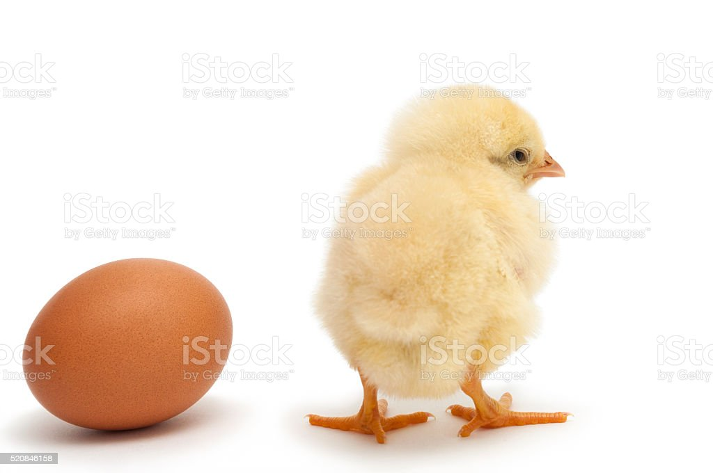 chick standing near to egg. stock photo