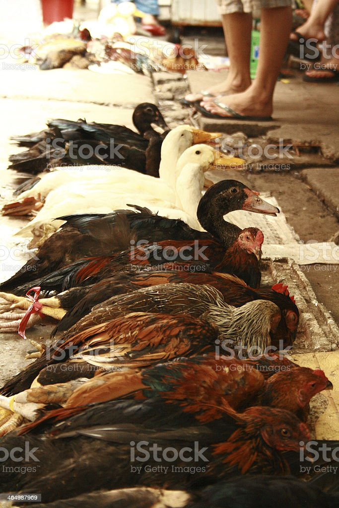 Chicken and ducks being displayed for sale in Vietnam royalty-free stock photo