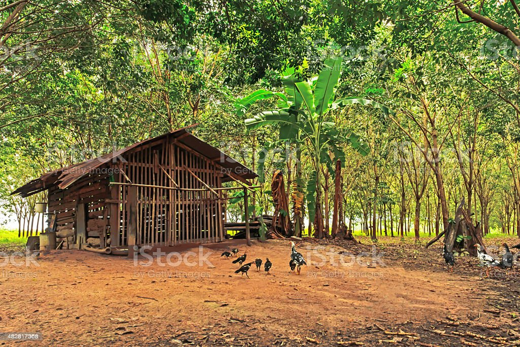 Chicken and peaceful countryside landscape, Northeast, Thailand stock photo