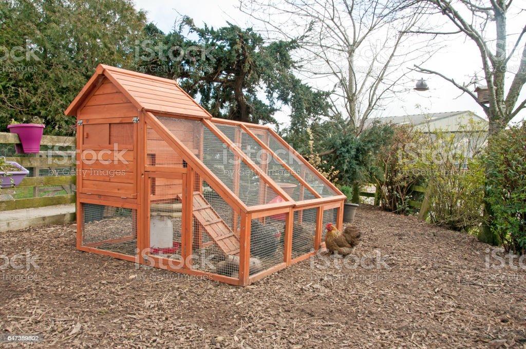 Chicken coop & bantam stock photo