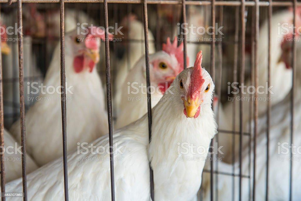 Chicken Coop stock photo