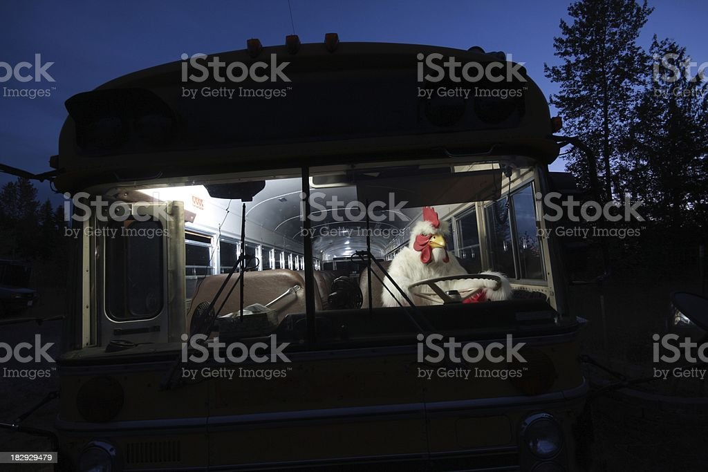 Chicken Driving a School Bus stock photo