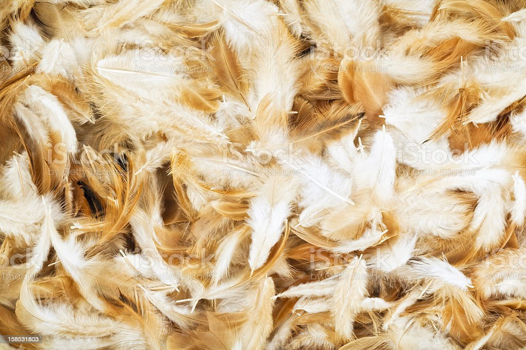 Chicken feather Background stock photo