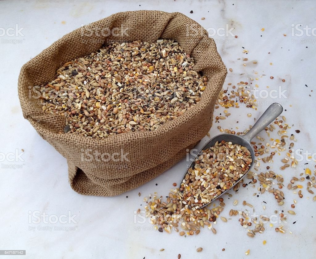 Chicken feed with many different sorts of grain stock photo