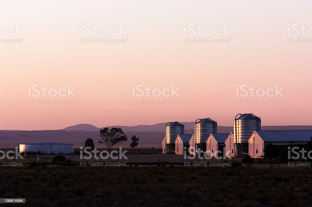 Chicken Growing Sheds stock photo