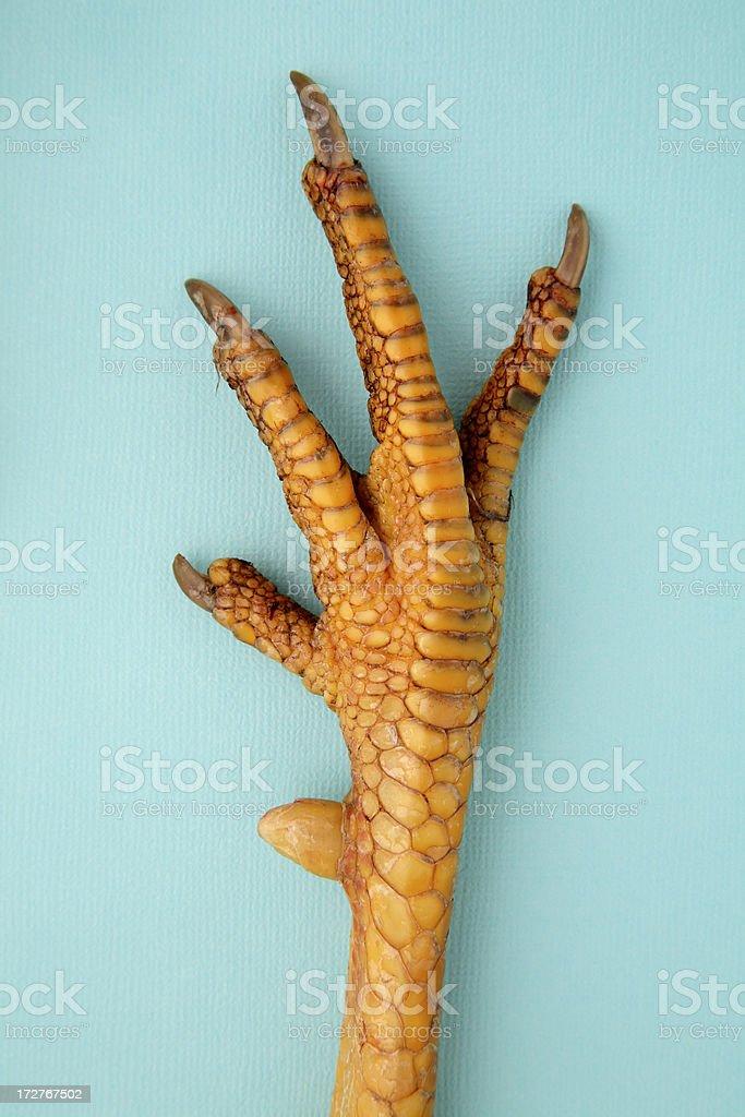 chicken hand royalty-free stock photo