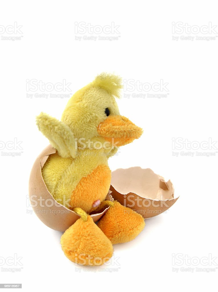 Chicken is born royalty-free stock photo