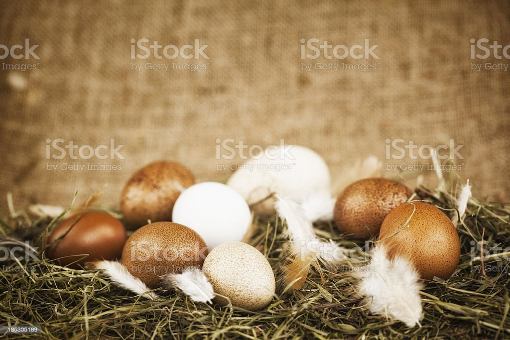 Chicken Nest Egg stock photo