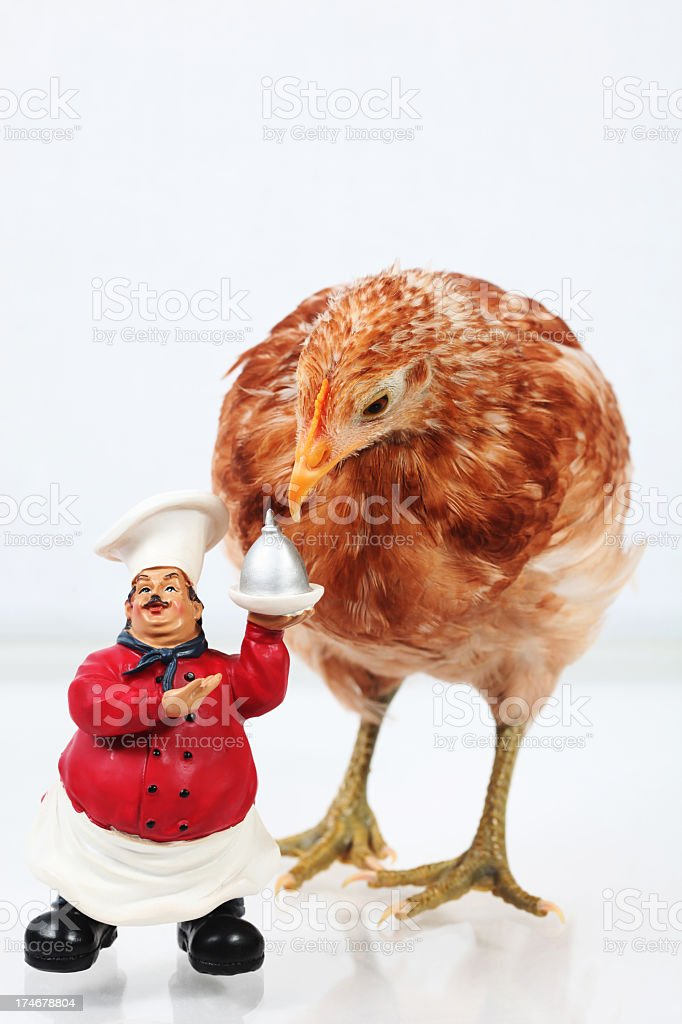 Chicken on the menu royalty-free stock photo