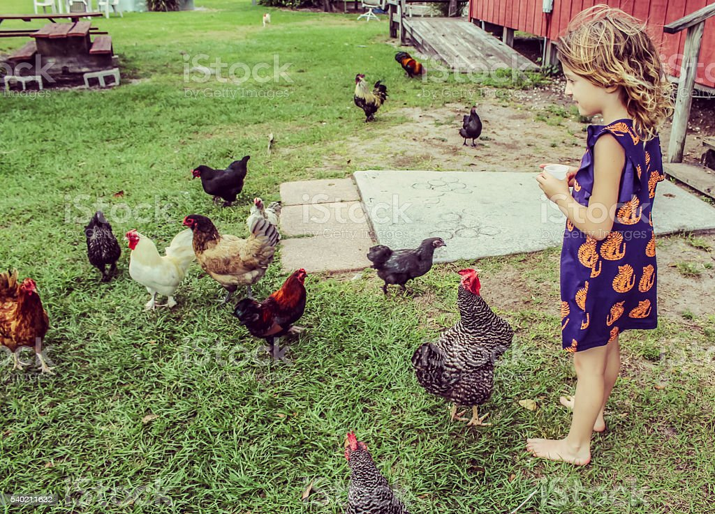 Chicken Tamer stock photo