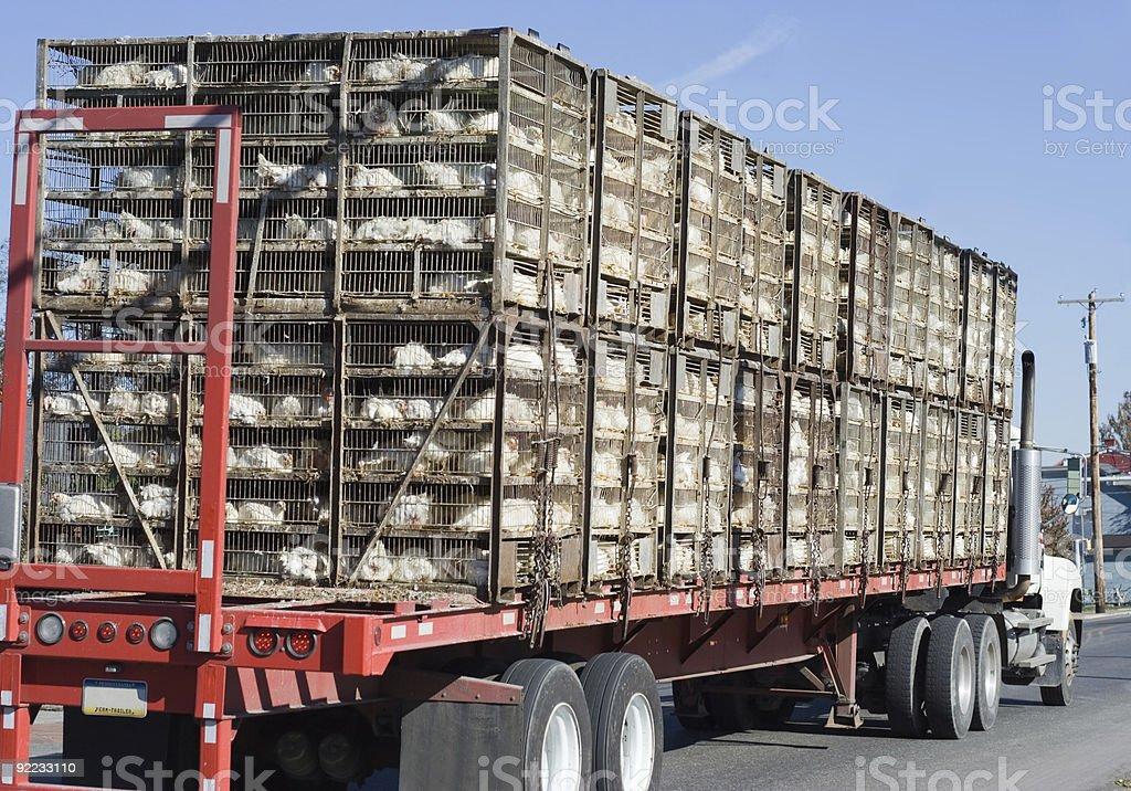 Chicken Truck stock photo