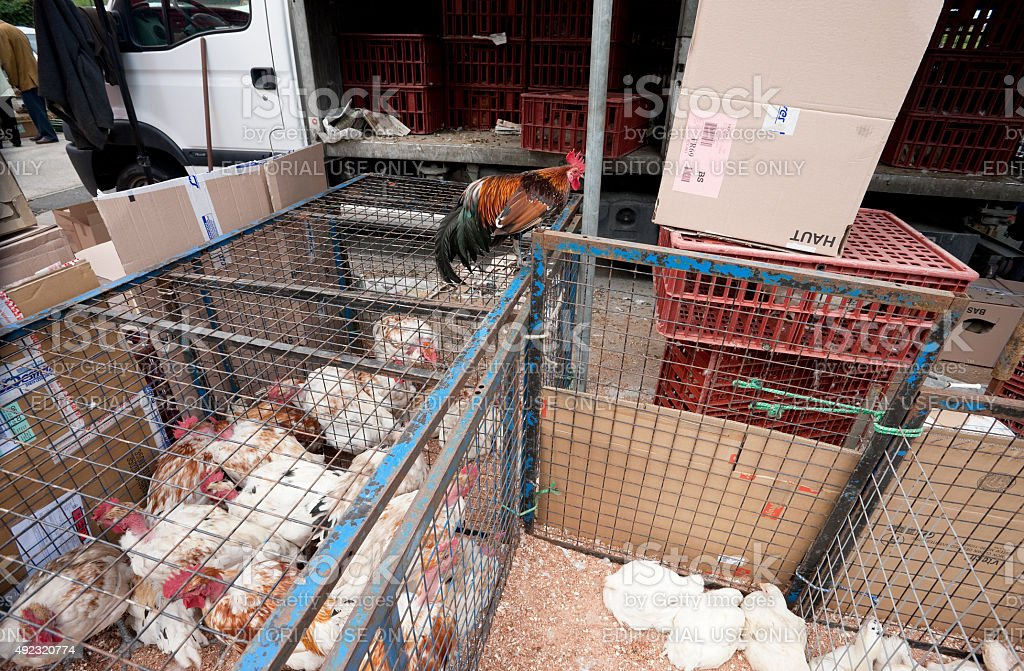 Chickens for sale at farmers market, Louhans, Burgundy, France stock photo