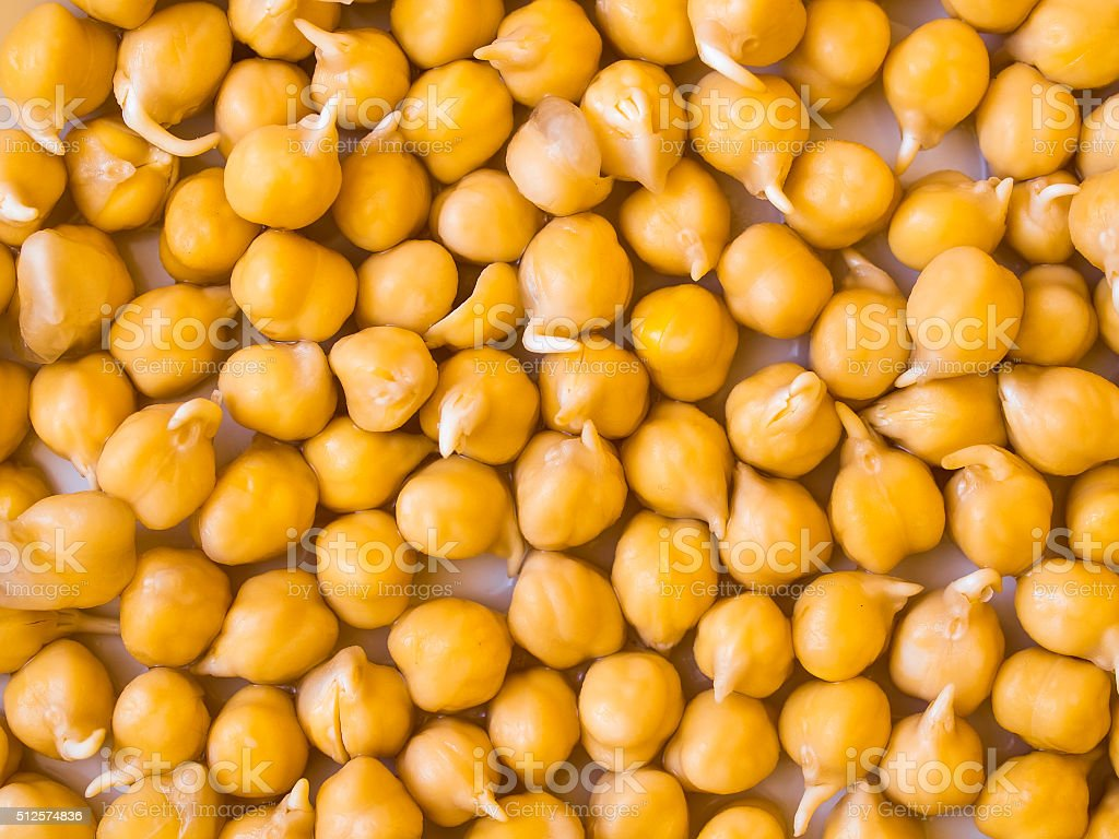 Chick-pea seedling stock photo