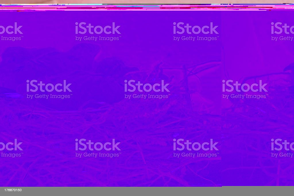 Chicks in Nest royalty-free stock photo