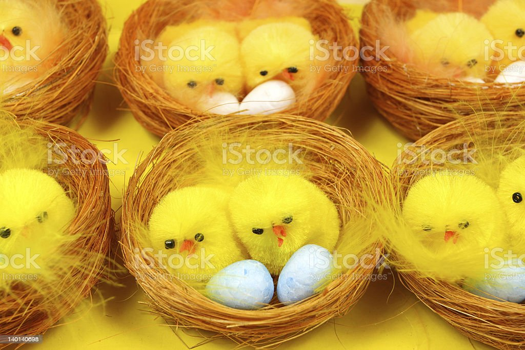 Chicks in nests stock photo