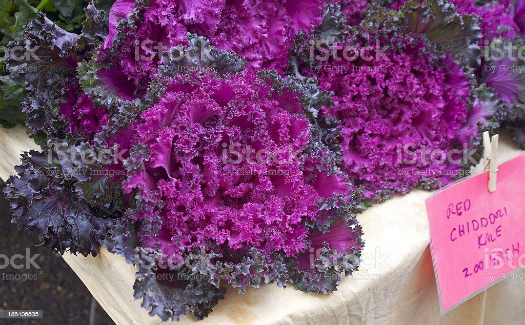 Chidori Kale stock photo
