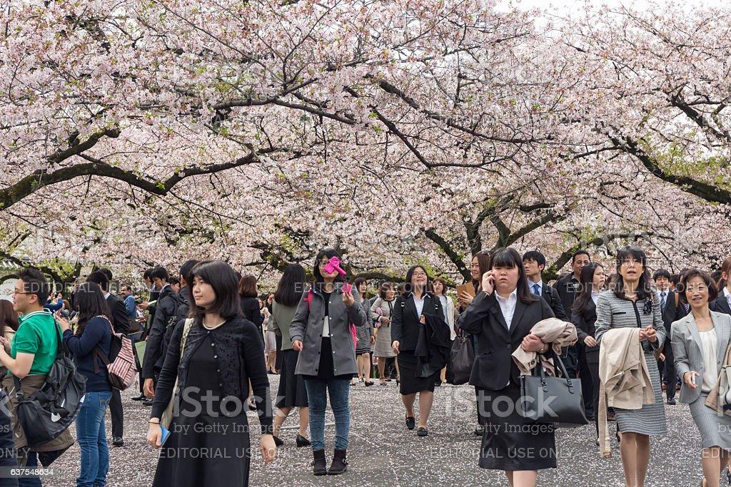 Chidorigafuchi park in spring season with cherry blossom. stock photo