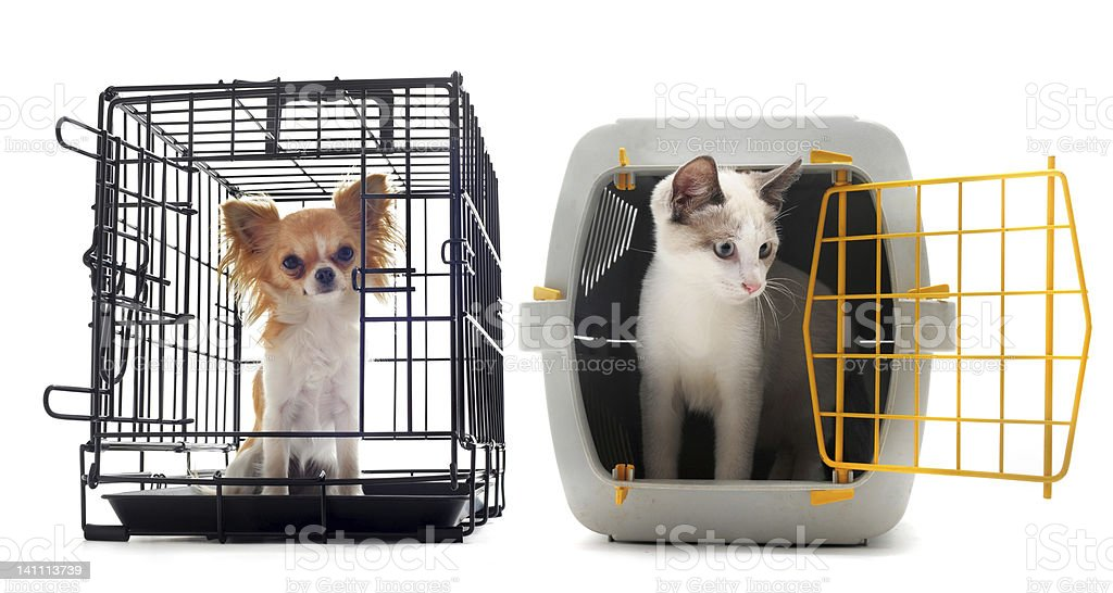 chihuahua and cat in kennel royalty-free stock photo