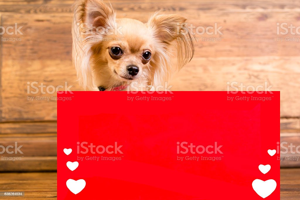 Chihuahua dog behind blank, red Valentine's Day banner. stock photo