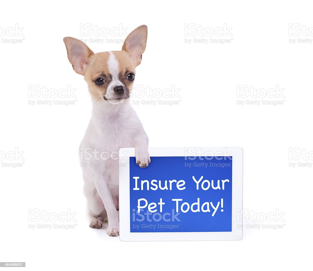 Chihuahua Holding a Digital Tablet with a Message royalty-free stock photo