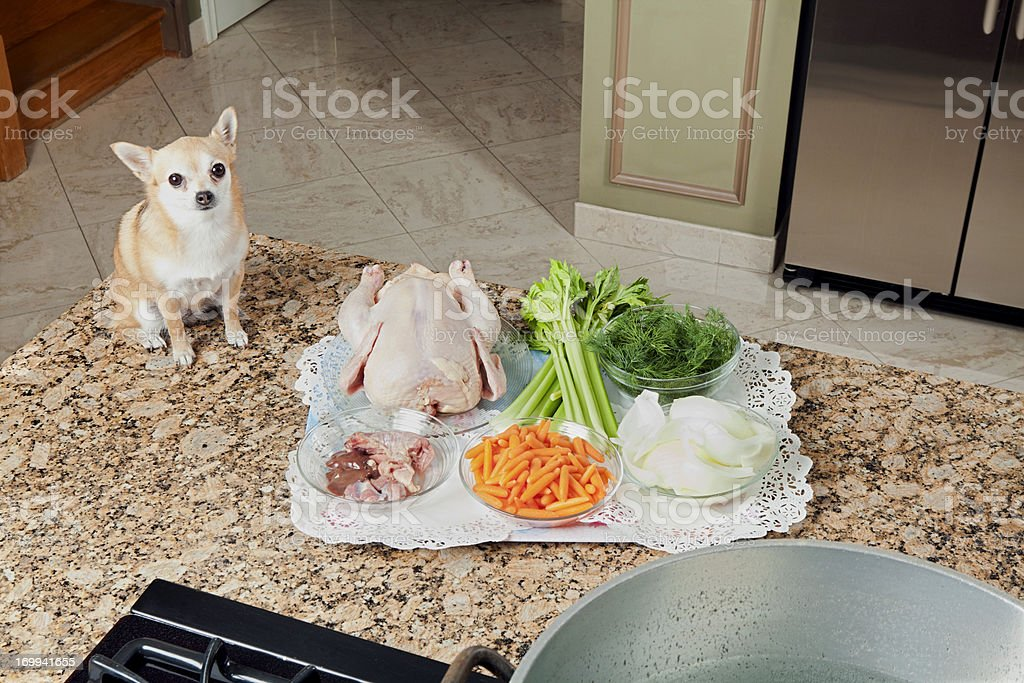 Chihuahua looking at soup ingredients stock photo