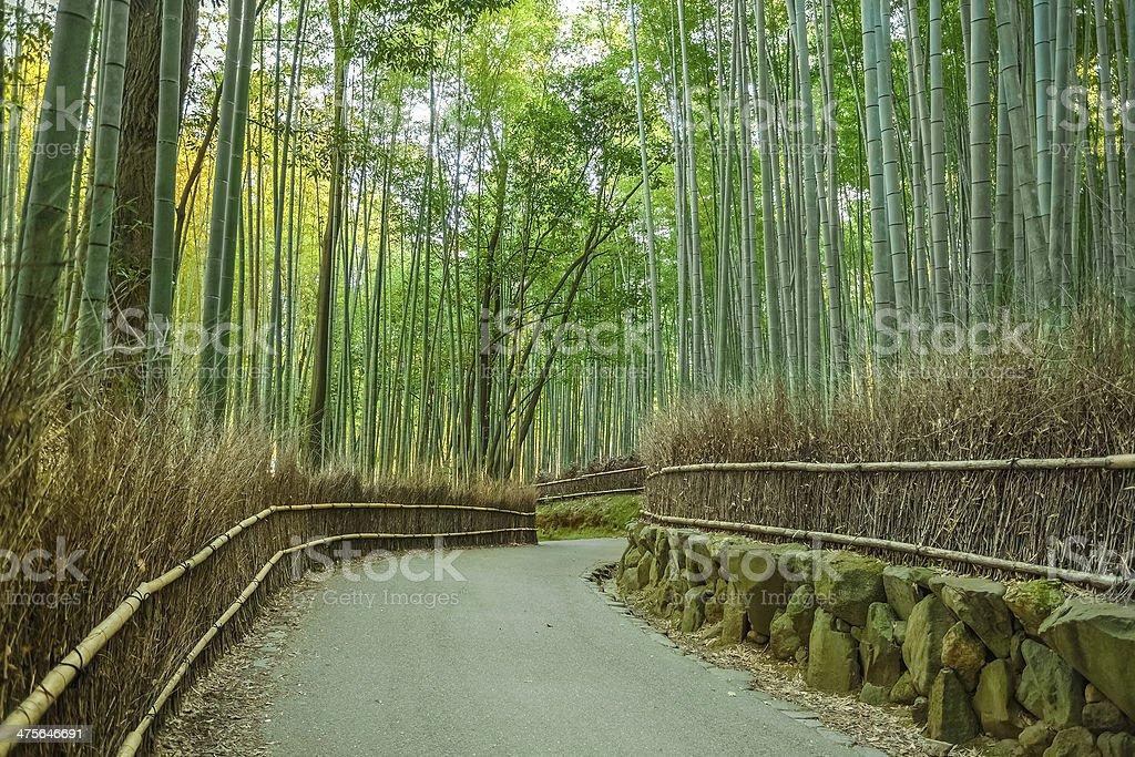 Chikurin-no-Michi (Bamboo Grove) at Arashiyama in Kyoto stock photo