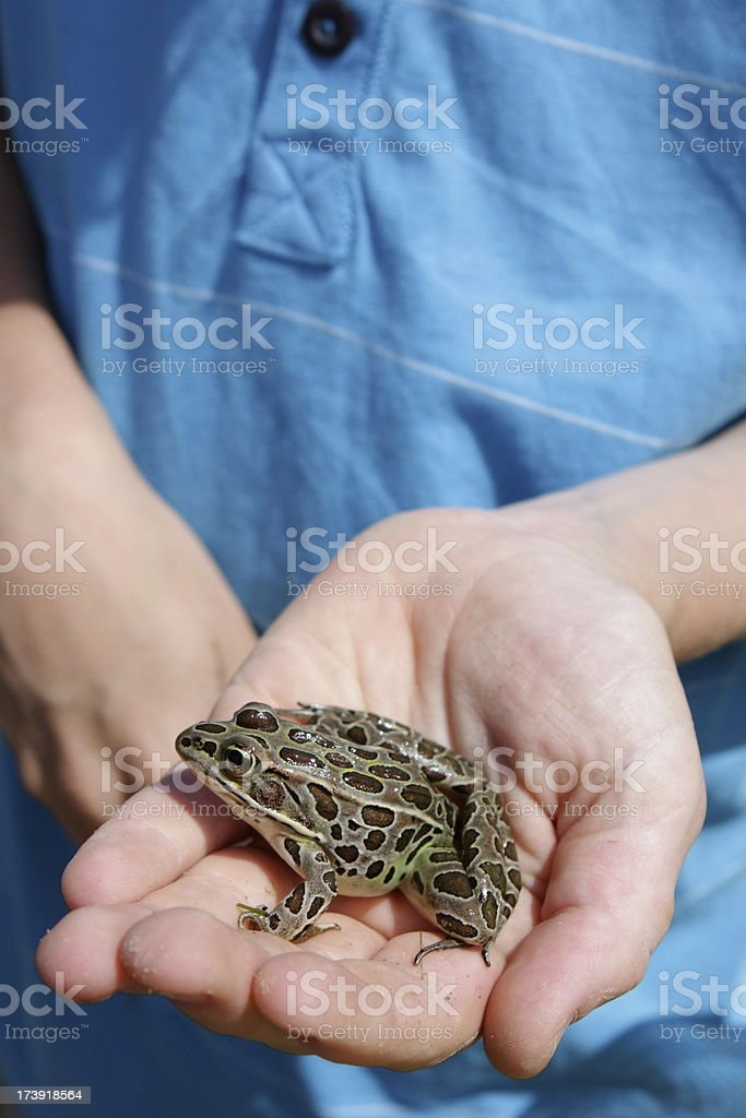 Child and Frog stock photo