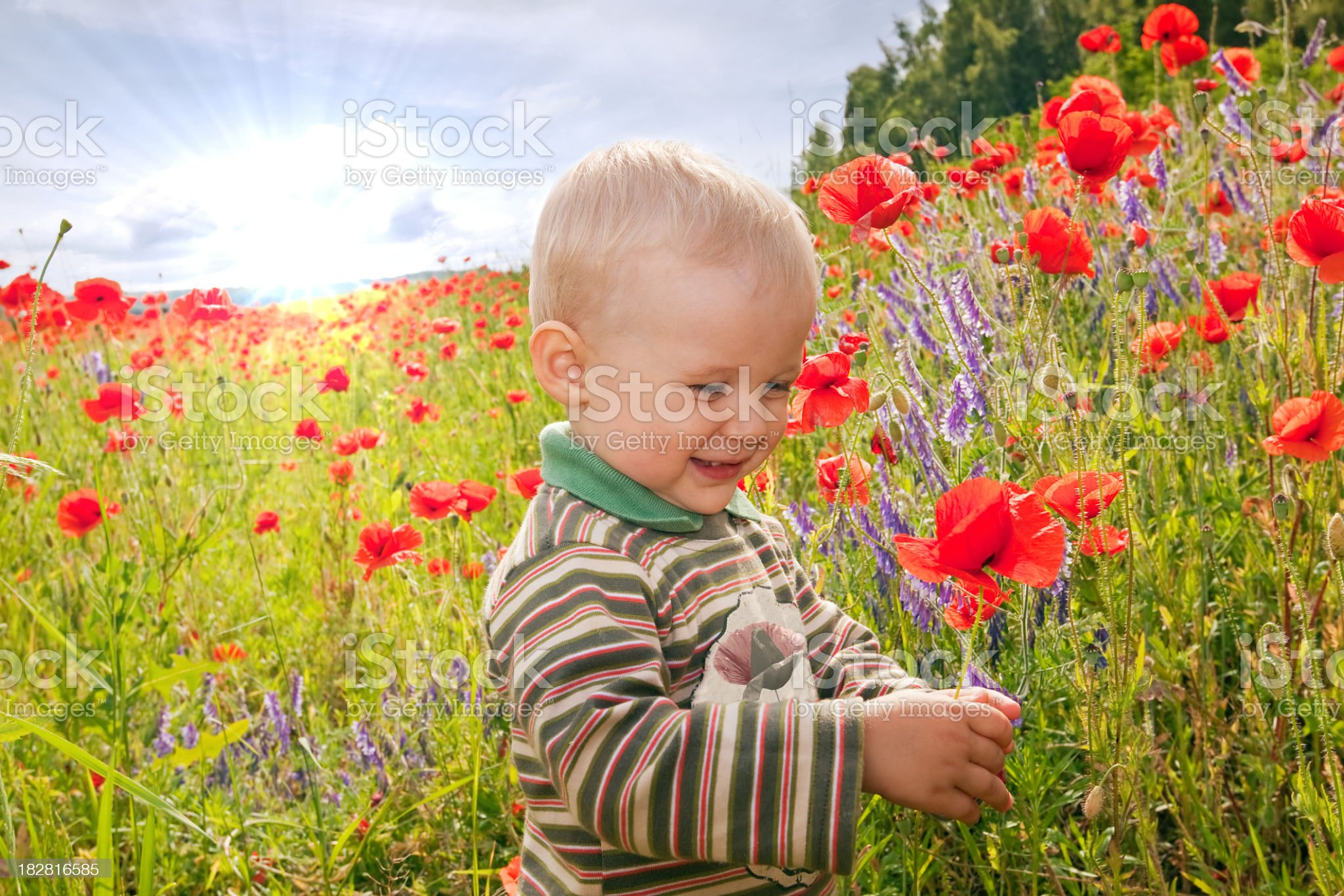 Child and poppies royalty-free stock photo