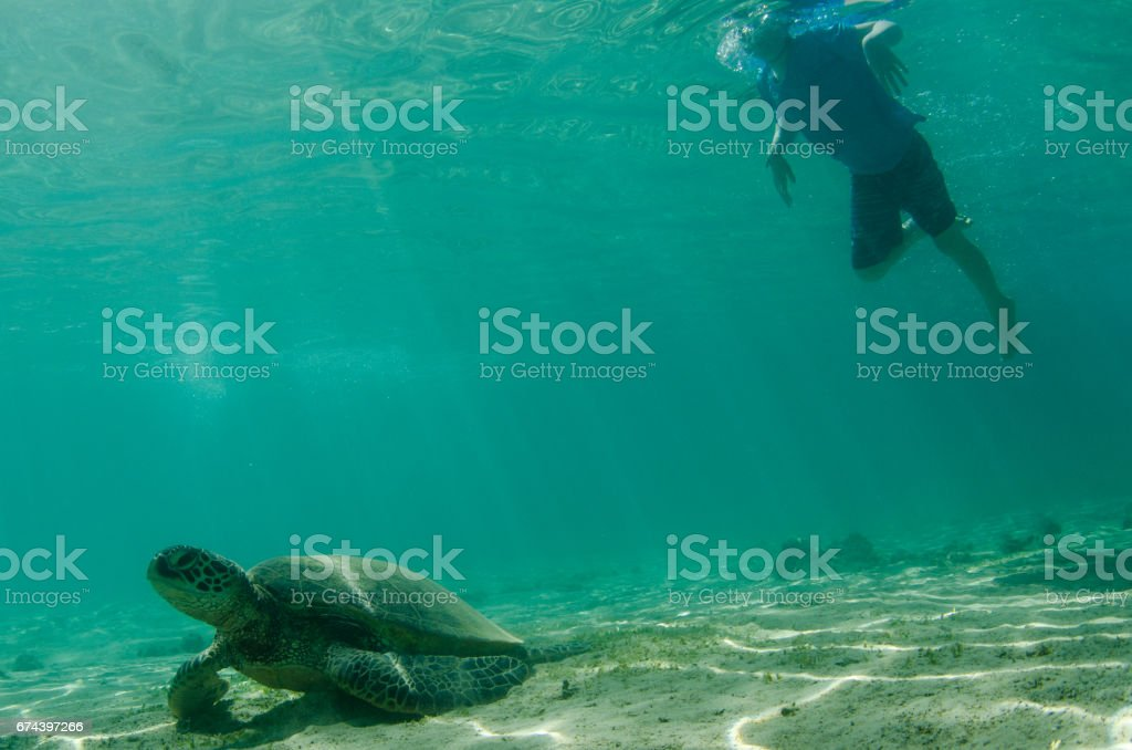 Child and sea turtle underwater in sandy cove stock photo