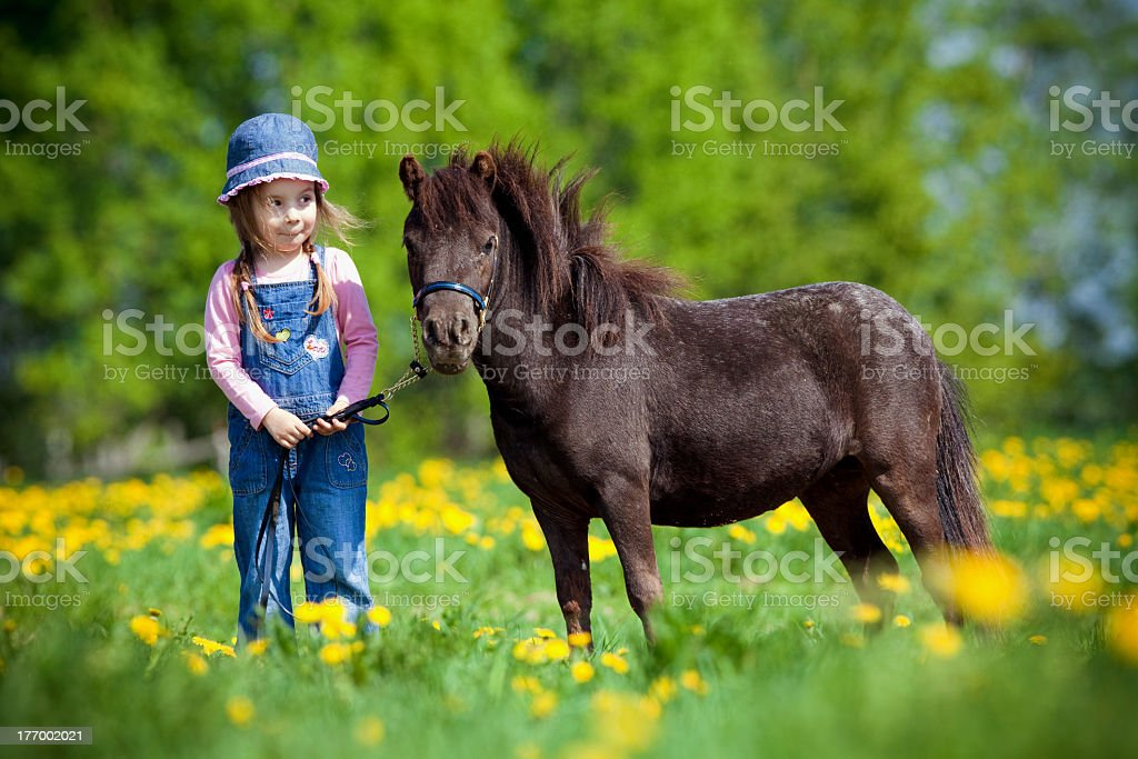 Child and small horse in the field stock photo
