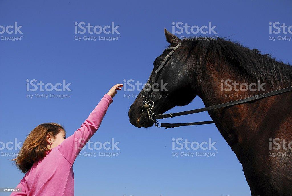 child and stallion royalty-free stock photo