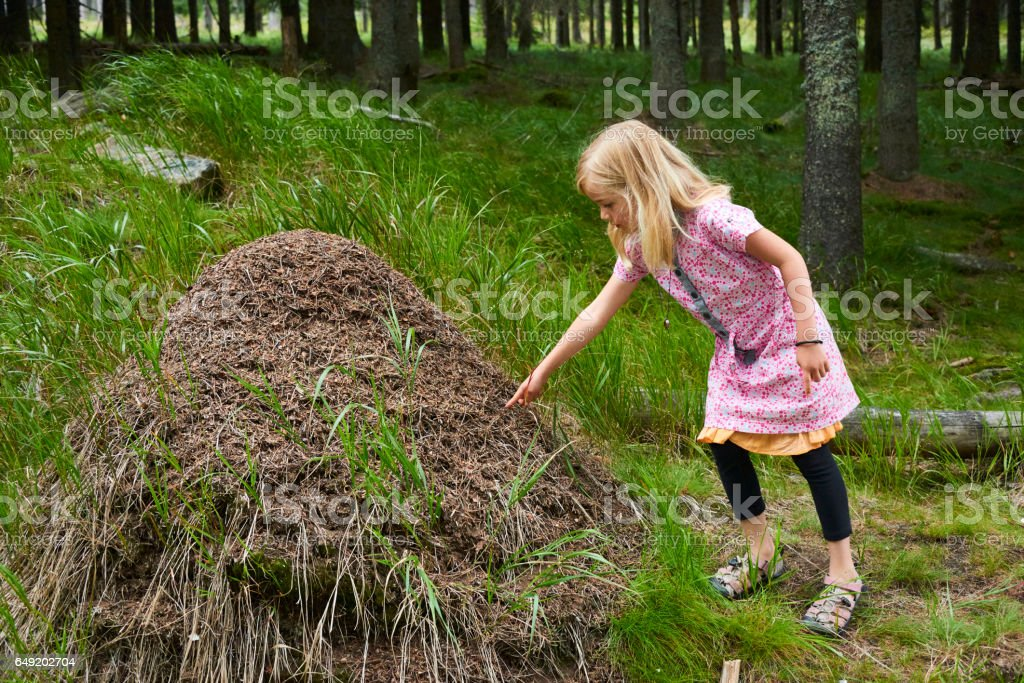 Child blond girl exploring anthill in the woods. stock photo