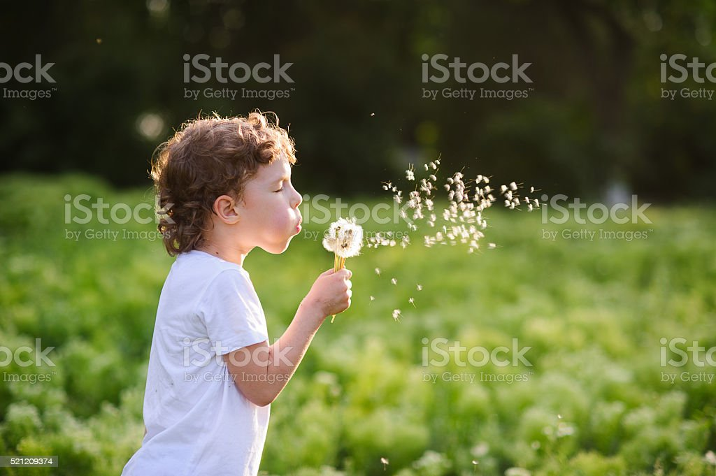 Child blowing a dandelion stock photo