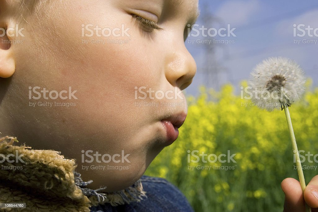Child blowing a dandelion with his eyes close stock photo