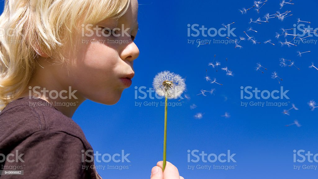 A child blowing on a dandelion royalty-free stock photo