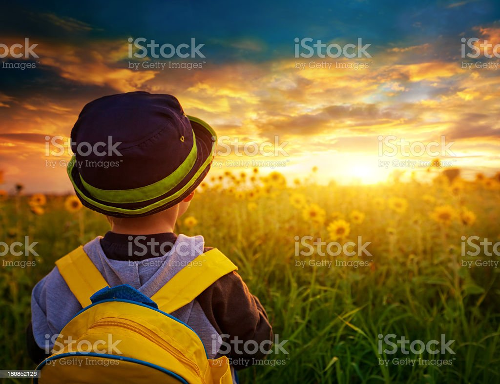 Child boy with a backpack on a sunflowers stock photo