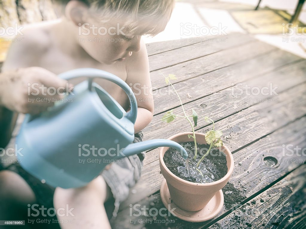 Child caring for and watering a plant stock photo