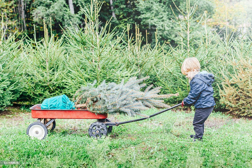 Child drags the Christmas tree chose on his cart stock photo