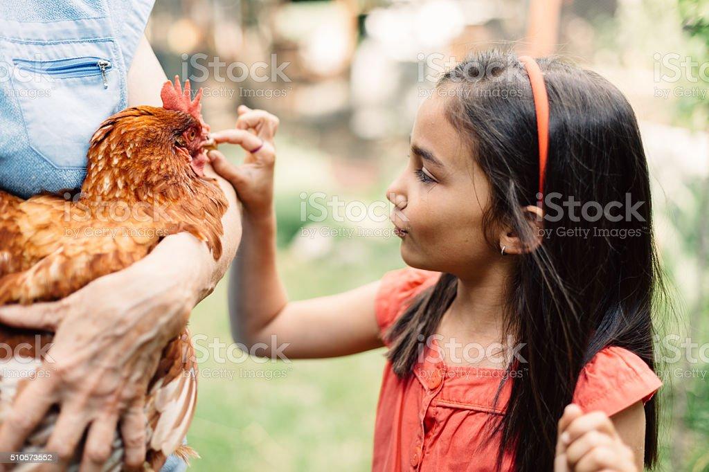 Child enjoying a brown hen stock photo