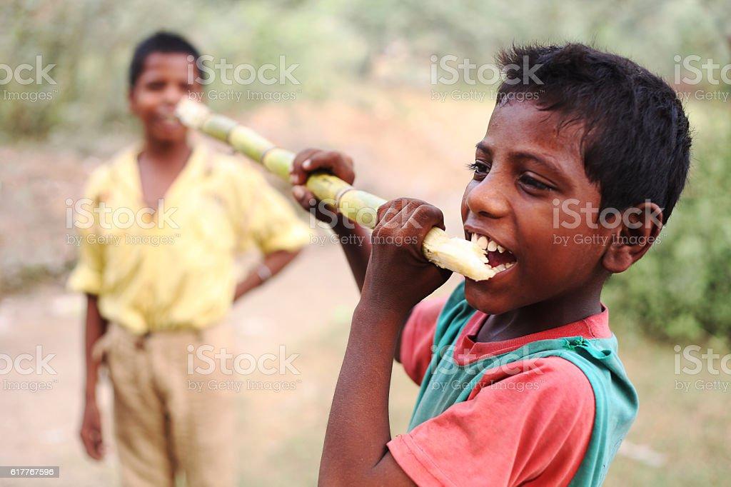 Child enjoying sugarcane stock photo