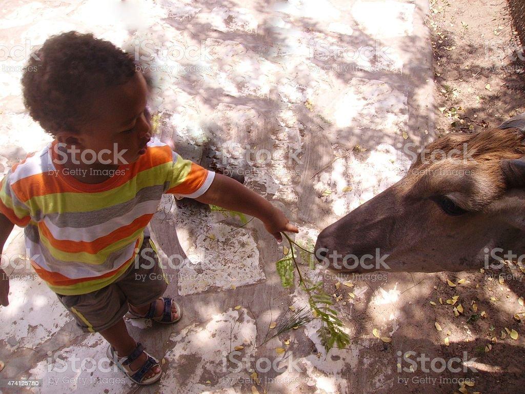 Child feeding an animal stock photo