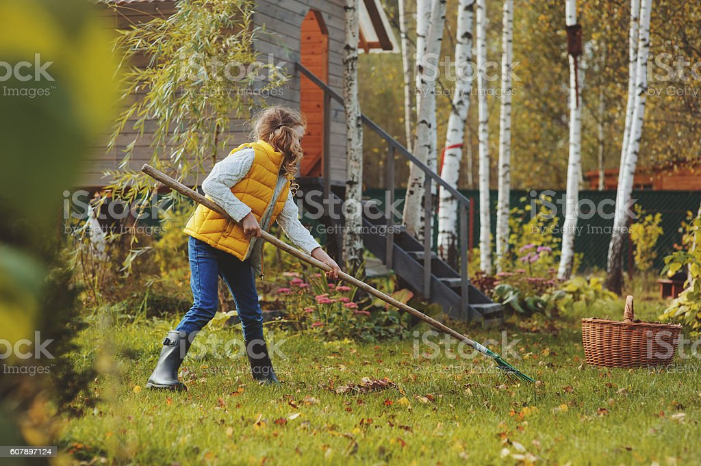 child girl playing little gardener in autumn and picking leaves stock photo